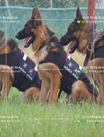 犬舍纯种德系德国牧羊犬幼犬 多只待售 品相好身体健