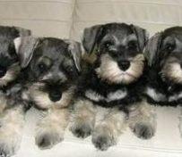 良心犬业丨卖健康宠物丨纯血统