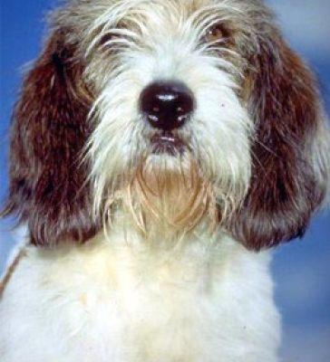 宠物狗 (17)