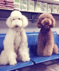 阿布宁波宠物狗专卖店