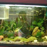 较简单较方便的鱼缸清洗小方法