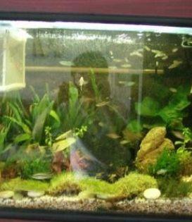 各种鱼病治疗 各种鱼缸清洗 各种鱼缸造景设计