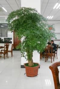 泉州绿植租摆晋江花卉出租办公室植物租赁花卉出租花卉租摆