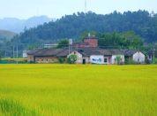 深圳农家乐推荐田园风光式的湖尔美农场基地